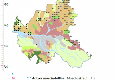 10-Verbreitung_Adoxa_moschatellina_in_HH
