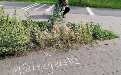 1. Kreideexkursion in Hamburg (Botanical Street Chalking)