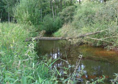 NSG Ammersbek-Niederung_umgestuerzter-Baum