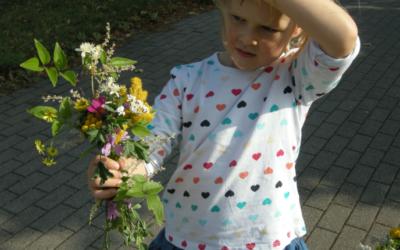 Wilde Blumen am Weg beim Jäger