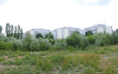 Die Wildnis zwischen Deelböge und Salomon-Heine-Weg
