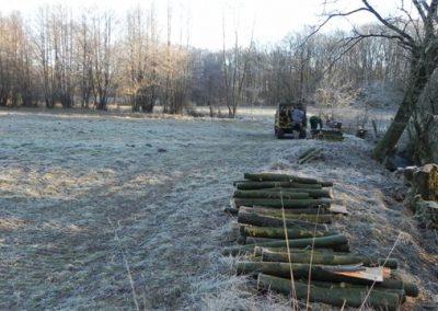 winterliche-Buschwiese